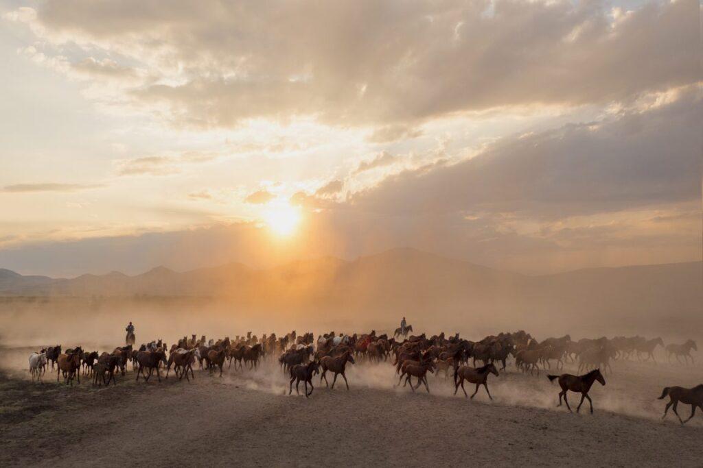 Erciyes'in Hırçın Çocukları Yılkı Atları