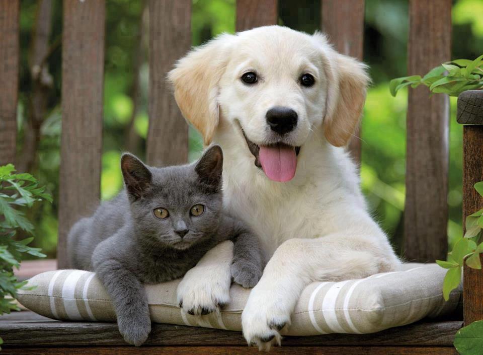 Minik Dostlarımızla Birlikte Uçakta Seyahat - Kedi Köpek ile Yolculuk