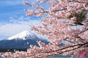 Cenneti Hissetmenin Zamanı; Japonya'da Sakura Mevsimi