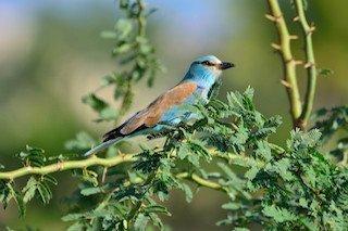 Kuş Fotoğrafçılığı - Türkiye'de Görülen Birbirinden Güzel 7Kuş Türü