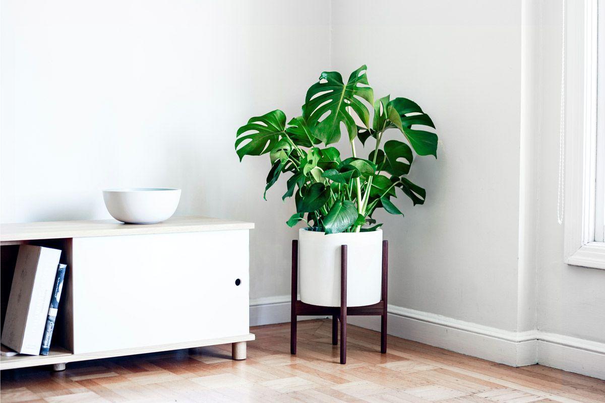 Bakımı Kolay 10 İç Mekan Bitkisi   Evde Yeşil Hayat / #evdekal