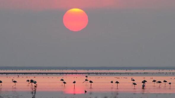 Seyfe Gölü Kuş Cenneti - Kırşehir Gezi Rehberi