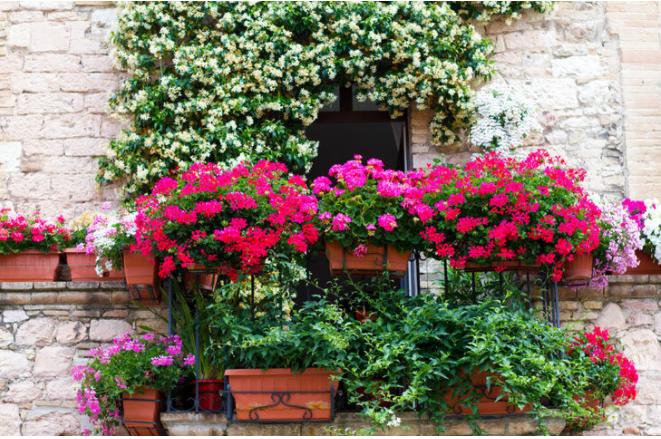 Balkon Bahçeciliği   Evinizde Yetiştirebileceğiniz 10 Bitki Önerisi