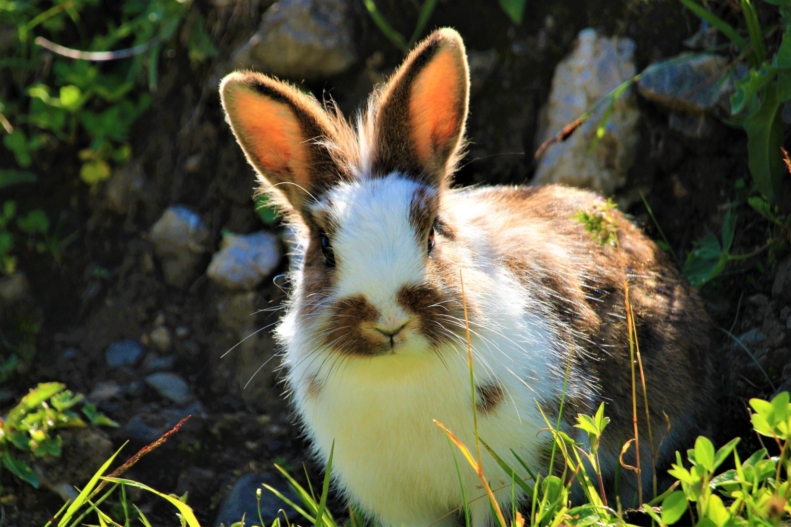 Tavşan Ralph'ın Toplumsal Yankısı