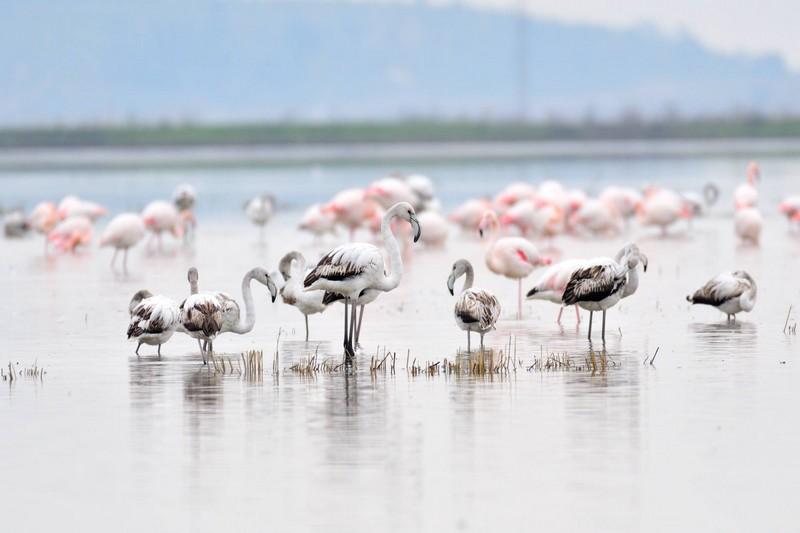 Marmara Bölgesi Milli Parkları