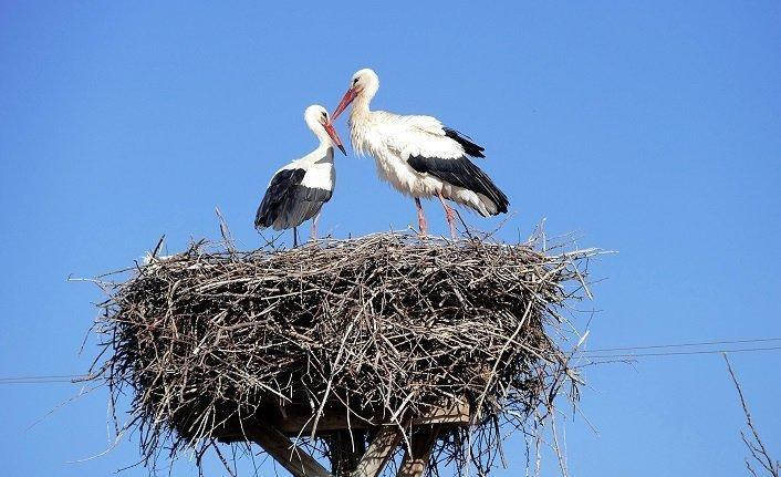 Boğaziçi Hayvanat Bahçesi ve Darıca Kuş Cenneti