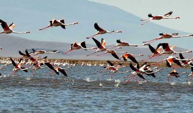 Türkiye'nin Kuş Cennetleri | Birbirinden Büyüleyici 6 Kuş Cenneti